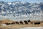 """PHOTO SAFARI IN THE GOBI DESERT"""