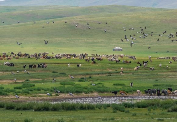 mongol-1